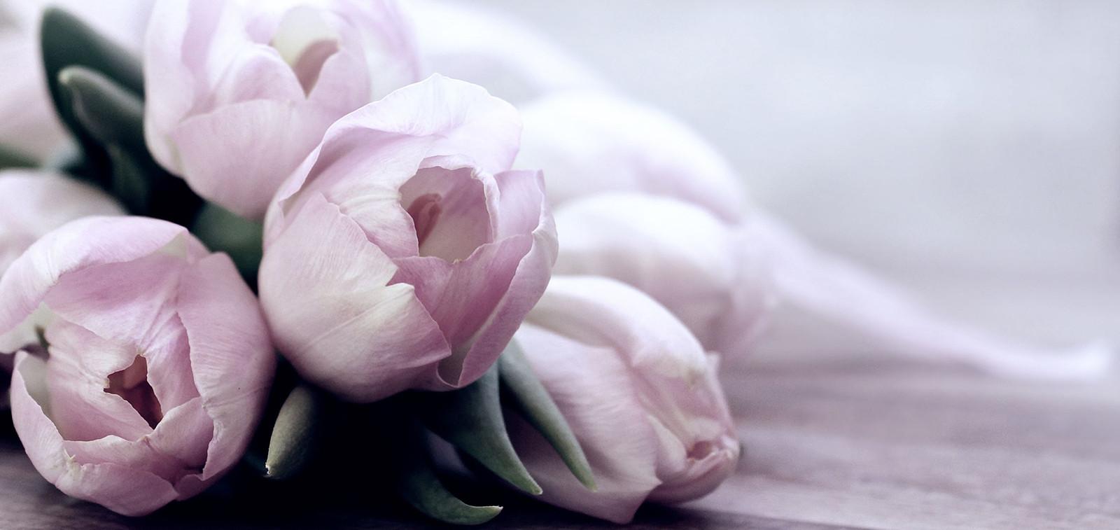 Vaaleanpunaisia tulppaaneja.
